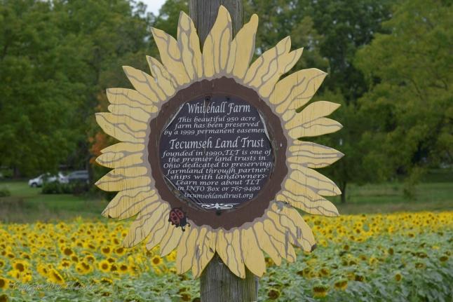 Sunflowers Whitehall Farm Tecumseh Land Trust http://tecumsehlandtrust.org/ Roberta Kayne photographer Angelica Ross Beavercreek, Oh Madi Hanson Joshua Tree, Ca